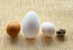 Close-up of different eggs. Of goose, chicken and quail  on striped background Royalty Free Stock Photo