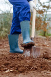 Close up of a digging Stock Images