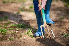 Work in a garden - Digging Spring Soil With Spading fork. Close up of digging spring soil with blue shovel preparing it for new sowing season stock photo