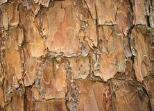 Close up a Dipterocarpus alatus Roxb.ex G Don Stock Photos