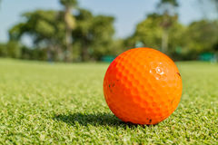 Close up the dirt golf ball on grass with blurred green golf course. Royalty Free Stock Photography