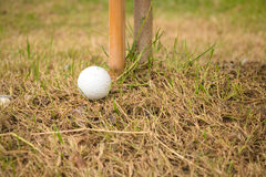Close up dirty golf ball in bad ground Stock Image