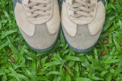 Close up dirty sneaker. Close up dirty sneaker standing on green grass Royalty Free Stock Image