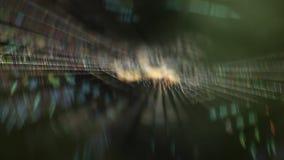 Close up disparado da Web de aranha vídeos de arquivo