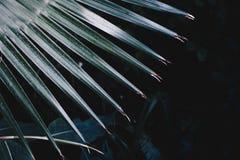 Close up disparado das folhas pontudo bonitas de uma planta tropical exótica imagem de stock royalty free