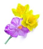 Close up disparado dos daffodils e das flores do açafrão Fotografia de Stock Royalty Free