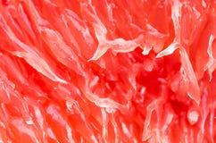 Close up dividido da toranja, fundo Fotografia de Stock Royalty Free