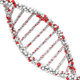 Close-up of the DNA molecule. 3d render on a white Royalty Free Stock Photography