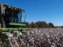 Close-up do algodão da colheita Fotografia de Stock