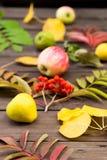 Close-up do amarelo do outono, das folhas do vermelho e do fruto no outono dourado do fundo de madeira foto de stock