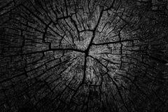 Close up do anéis de madeira Fundo de madeira abstrato Um fim acima do corte de uma árvore de cortiça Textura de madeira abstrata imagens de stock