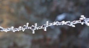 Close up do arame farpado no inverno Fotografia de Stock
