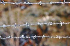 Close up do arame farpado no inverno Imagens de Stock Royalty Free