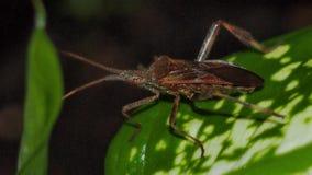 Close-up do besouro Fotos de Stock