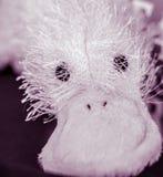 Close-up do brinquedo enchido macio com olhos redondos e o bico grande fotos de stock