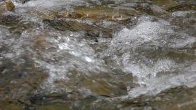 Close up do córrego puro do rio da montanha no movimento lento video estoque