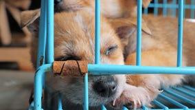 Close-up do cachorrinho do sono no abrigo atrás da cerca que espera para ser salvado e adotado à casa nova Abrigo para animais video estoque