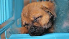 Close-up do cachorrinho do sono no abrigo atrás da cerca que espera para ser salvado e adotado à casa nova Abrigo para animais filme