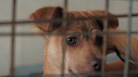 Close-up do cachorrinho triste no abrigo atr?s da cerca que espera para ser salvado e adotado ? casa nova Abrigo para o conceito  vídeos de arquivo