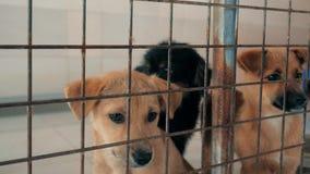 Close-up do cachorrinho triste no abrigo atr?s da cerca que espera para ser salvado e adotado ? casa nova Abrigo para o conceito  video estoque