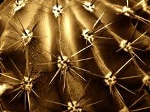 Close-up do cacto imagens de stock royalty free