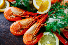 Close up do camarão com limão e aneto Foto de Stock Royalty Free