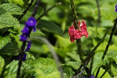 Close-up do campo de flores roxas com folhas verdes fotografia de stock