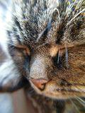 Close-up do cat& x27; cara de s fotos de stock royalty free