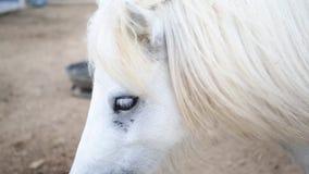 Close-up do cavalo branco filme