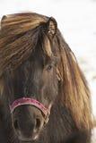 Close up do cavalo do marrom escuro Imagens de Stock