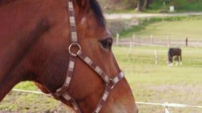 Close up do cavalo marrom que lan? a cabe?a, olhando afastado para encerrar filme