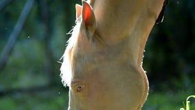 Close up do cavalo na luz do contorno video estoque