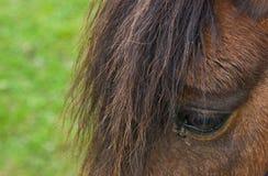 Close-up do cavalo no campo Imagens de Stock Royalty Free