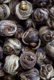 Close up do chá chinês Fotografia de Stock