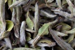 Close up do chá chinês Fotos de Stock