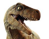 Close up do dinossauro Fotos de Stock Royalty Free