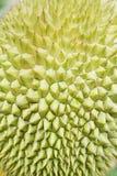 Close up do espinho do Durian fotos de stock royalty free