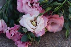 Close up do eustoma cor-de-rosa fotografia de stock royalty free