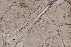 Close-up do fóssil em uma fachada da parede fotografia de stock royalty free