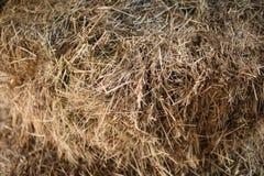 Close up do feno da textura na cor Forragem para rebanhos animais Fotografia de Stock Royalty Free