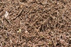 Close-up do formigueiro com formigas vermelhas Fotos de Stock Royalty Free