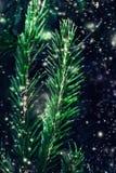 Close up do fundo da árvore de Natal com neve de queda Feliz Natal e feliz Fotos de Stock Royalty Free