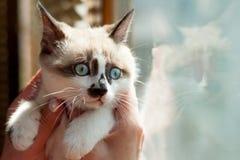 Close-up do gatinho dentro Imagens de Stock