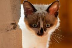 Close-up do gatinho dentro Imagem de Stock