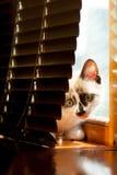 Close-up do gatinho dentro Fotografia de Stock Royalty Free