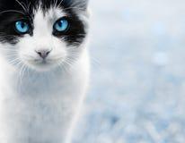 Close up do gato imagens de stock