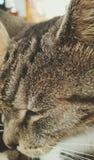 Close-up do gato fotos de stock