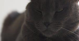 Close up do gato cinzento que senta-se e que descansa na prateleira da janela imagem de stock royalty free