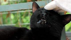 Close-up do gato disperso prendido trocas de carícias da mão do voluntário no abrigo do animal de estimação Conceito dos povos, d video estoque