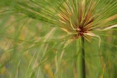 Close-up do geass decorativos Imagem de Stock